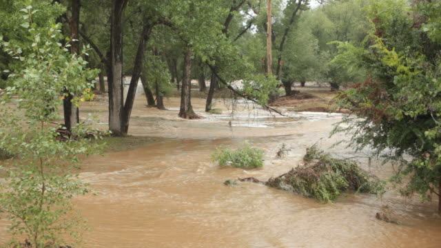 hd video boulder creek floods colorado - cottonwood tree stock videos and b-roll footage