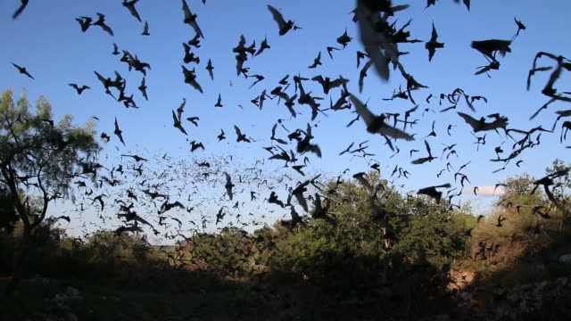 hd video clouds of mexican free-tailed bats texas - bat animal stock videos and b-roll footage