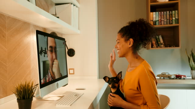 video conference - pets stock videos & royalty-free footage
