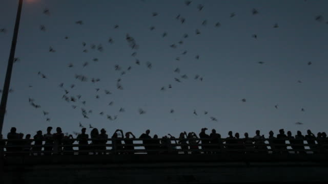 stockvideo's en b-roll-footage met hd video crowds watch mexican free-tailed bats texas - austin texas