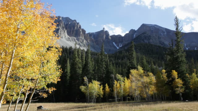 hd video fall aspen and nevada's great basin national park - nevada stock videos & royalty-free footage