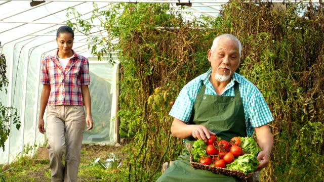 4k video family harvesting vegetables from garden - distillery still stock videos & royalty-free footage