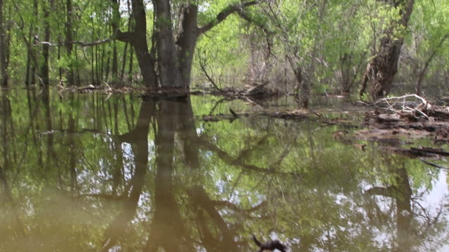 hd video flooded cottonwood forest and kayak colorado state park - cottonwood tree stock videos and b-roll footage