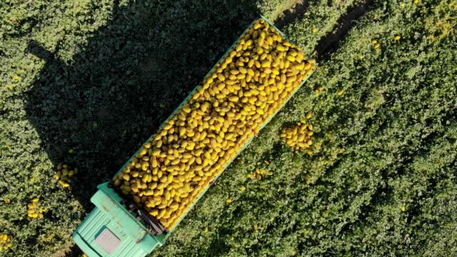 4k videomaterial, ernte von melonen, lkw trägt melonen, ansicht von oben, aero-video - tierisches verhalten stock-videos und b-roll-filmmaterial