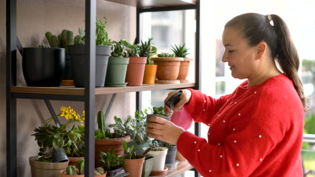4k video footage of a mature woman spraying water on succulent and cactus plants on the balcony at home - flowering cactus stock videos & royalty-free footage