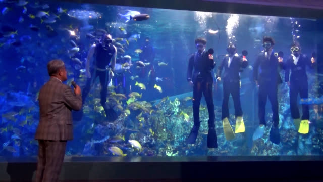 video footage taken at toba aquarium in toba, mie prefecture, shows the facility's annual ceremony for welcoming its newly hired employees held on... - underwater stock videos & royalty-free footage
