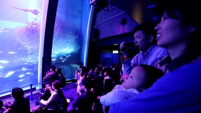 video footage taken at yokohama hakkeijima sea paradise in kanagawa prefecture shows a school of about 70000 sardines illuminated pink to resemble... - 水族館点の映像素材/bロール