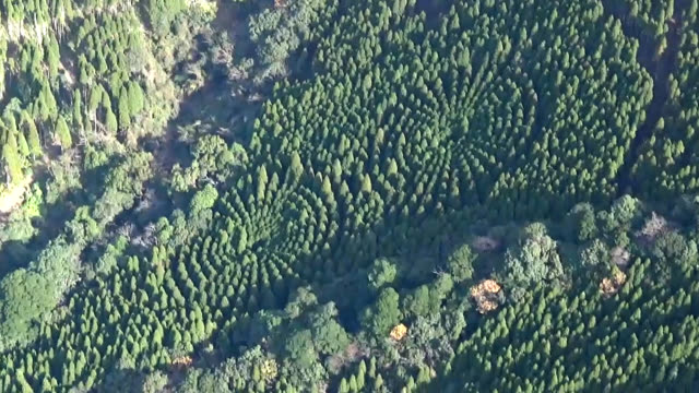 """video footage taken from a helicopter hovering above a wooded region of nichinan miyazaki prefecture shows two """"mystery circles"""" formed by 720 cedar... - cedar stock videos & royalty-free footage"""