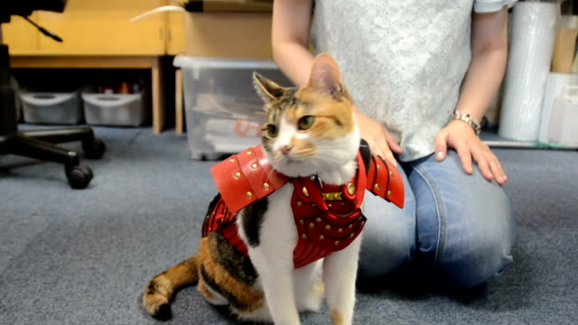 video footage taken in fukuoka shows a rather reluctant cat being fitted with a suit of samuraistyle armor made by a silkscreen printing firm located... - suit of armor stock videos and b-roll footage