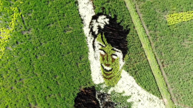 Video footage taken in Kakuda Miyagi Prefecture shows a 5000squaremeter rice paddy carefully planted with several different varieties of rice to grow...