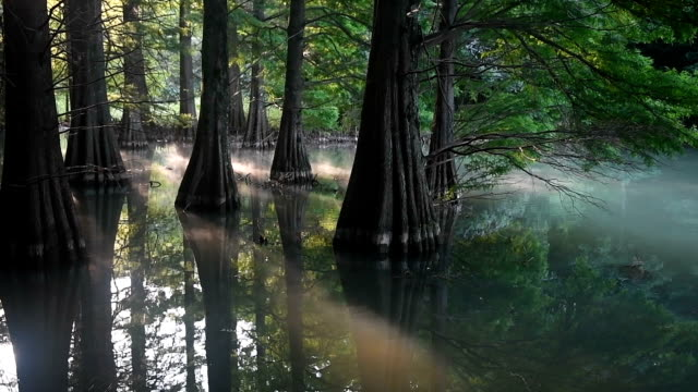 video footage taken in sasaguri fukuoka prefecture shows trees standing in a pond that has suddenly become a popular destination after word of its... - pond life stock videos and b-roll footage
