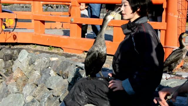 "stockvideo's en b-roll-footage met video footage taken in uji kyoto prefecture shows mariko sawaki an ""usho"" who uses cormorants to fish in the ujigawa river teaching the aquatic birds... - cormorant"
