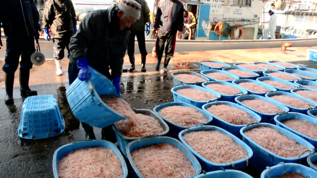 """video footage taken on april 3 japan at the shinminato fishing port in imizu toyama prefecture shows the first boatloads of famed """"jewels"""" from... - toyama prefecture stock videos and b-roll footage"""