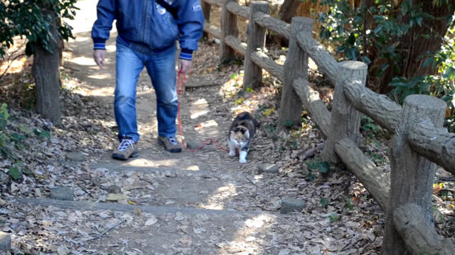 Video footage taken on Jan 9 shows Chami an overweight cat who has become a social media celebrity at Azumayama Park in Ninomiya Kanagawa Prefecture...