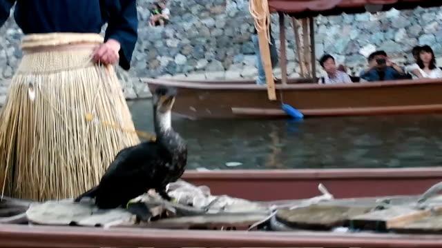"stockvideo's en b-roll-footage met video footage taken on july 1 in uji kyoto prefecture shows an ""usho"" cormorant fisherwoman using the trained aquatic birds to fish in the ujigawa... - cormorant"
