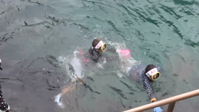video footage taken on july 7 in kuji iwate prefecture shows eri nagano braving 15degree waters during her debut professional dive to gather sea... - ricci di mare video stock e b–roll