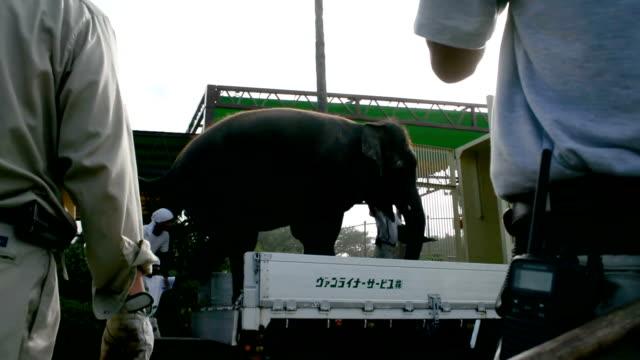 Video footage taken on July10 in Miyazaki shows Midori a 17yearold Asian elephant belonging to Miyazaki City Phoenix Zoo being transported by truck...