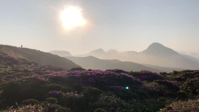 "video footage taken on june 14 at the kuju mountain range in oita prefecture shows flowering ""miyama kirishima"" flowers wet with dew blanketing the... - condensation stock videos & royalty-free footage"