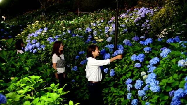 "vídeos y material grabado en eventos de stock de video footage taken on june 7 at mimurotoji temple in uji kyoto prefecture shows the many varieties of ""ajisai"" hydrangea flowers blooming on its... - hortensia"