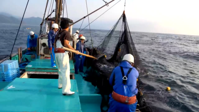 video footage taken on march 23 in muroto, kochi prefecture, shows fishermen from the local shiina fishing port netting and bringing in dozens of... - 漁師点の映像素材/bロール