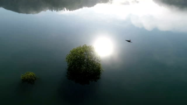 video footage taken on may 11 by a drone flying over shirakawa dam in iide yamagata prefecture shows an unusual landscape of willows and other trees... - yamagata prefecture stock videos & royalty-free footage