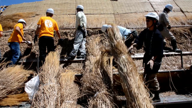 video footage taken on may 19 shows an international group of workers thatching a traditional steeproofed house in the shirakawago district in gifu... - strohdach stock-videos und b-roll-filmmaterial