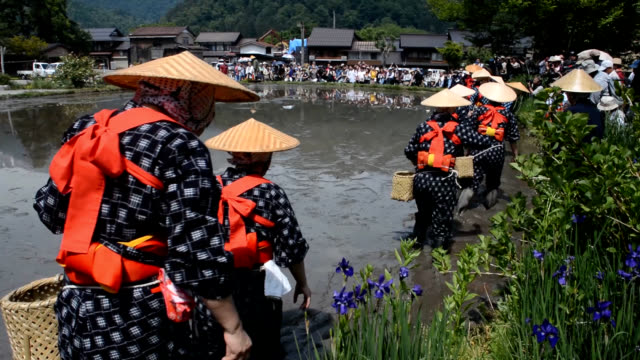 "video footage taken on may 27 shows a group of women dressed in distinctive ""saotome"" riceplanting outfits working in a paddy in front of traditional... - thatched roof stock videos and b-roll footage"