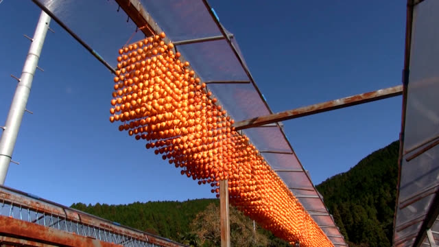 video footage taken on nov. 5 in katsuragi, wakayama prefecture, shows persimmons being peeled, skewered and hung out to dry for traditional new... - decoration点の映像素材/bロール