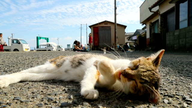 Video footage taken on November 3Japan on Ainoshima a small island in Fukuoka Prefecture shows a number of felines soaking up sunlight and the...