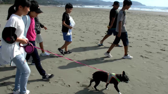 video footage taken on oct 15 along the seaside in kuroshio kochi prefecture shows local elementary school students picking up trash from the beach... - canine stock videos & royalty-free footage
