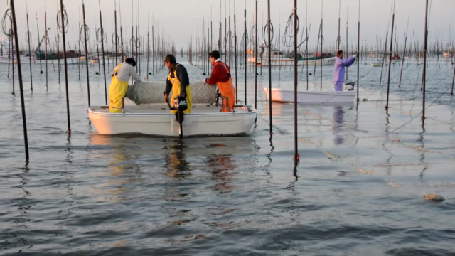 "video footage taken on oct 25 in the ariake sea off saga city shows ""nori"" seaweed growers laying nets for the aquatic plants on the opening day of... - ariake sea stock videos and b-roll footage"