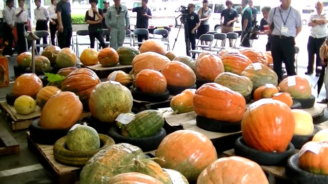 video footage taken on sept. 13 in shimanto, kochi prefecture, shows giant pumpkins being weighed to decide the winner of a competition to see who... - contest stock videos & royalty-free footage