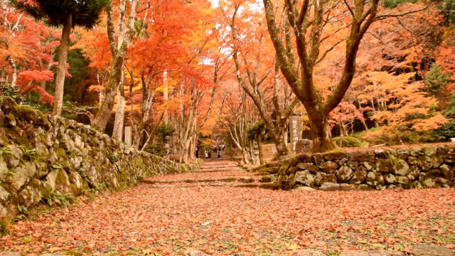 video footage taken on the grounds of keisokuji temple in nagahama shiga prefecture shows visitors enjoying the rich autumn hues and carpet of fallen... - 打ち捨てられた点の映像素材/bロール