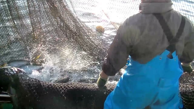 video footage taken recently in muroto, kochi prefecture, shows fishermen setting off from the fishing port of kina in the early morning to bring... - 漁師点の映像素材/bロール