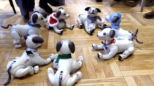 Video footage taken shows owners of Sony's Aibo robot dog showing off their mechanical pets some dressed in costumes at a gathering held at a café in...