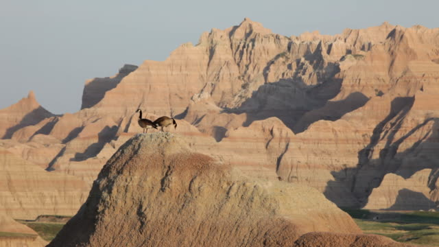 HD video Geese in Badlands National Park South Dakota