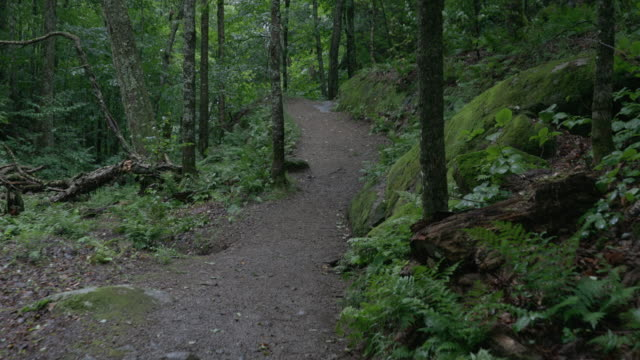 4K Video POV of Hiker Walking and Exploring the Forest on a Rainy Day