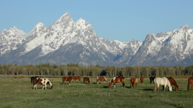 hd video horses graze grand teton national park - grand teton national park stock videos & royalty-free footage