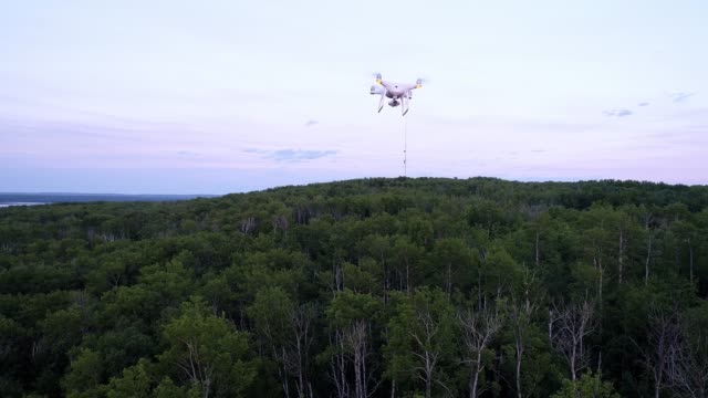 video of a drone flying over a wooded area - aircraft point of view stock videos & royalty-free footage