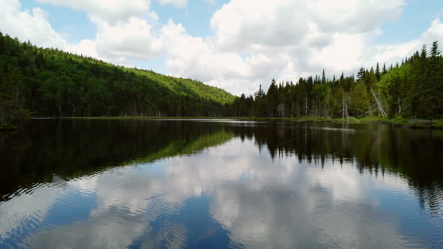 video of a fishing lake in early summer. - fishing line stock videos & royalty-free footage
