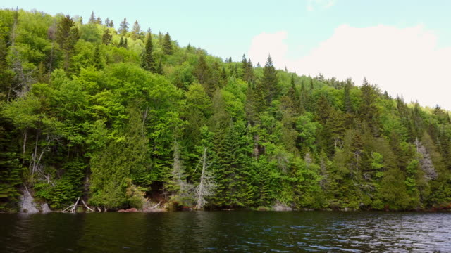 video of a fishing lake in early summer. - fishing industry stock videos & royalty-free footage