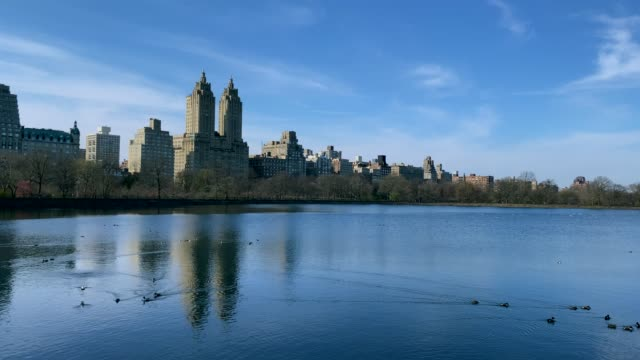video of a lake with ducks in central park at the beginning of spring - central park manhattan stock videos & royalty-free footage