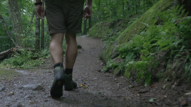 4k video of a man hiker walking and exploring the forest on a rainy day - following moving activity stock videos & royalty-free footage