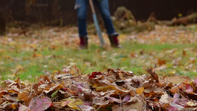 hd video of a woman raking her yard during autumn. - cold temperature stock videos & royalty-free footage