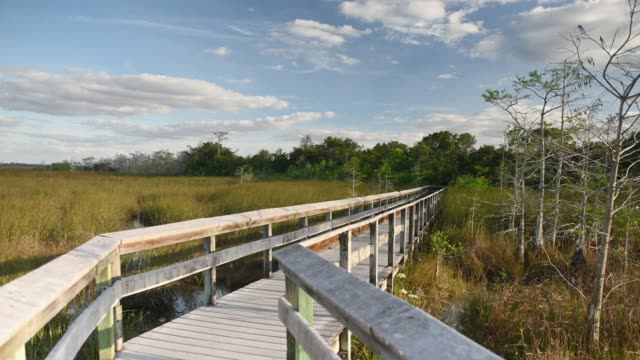 video of boardwalk trail through everglades national park landscape in florida  usa - miami dade county stock videos & royalty-free footage