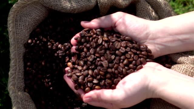 vídeos de stock e filmes b-roll de vídeo de verificação grãos de café em câmara lenta real - café edifício de restauração