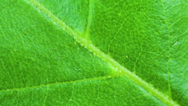 4k video of close-up of water drop on green leaf - vein stock videos & royalty-free footage