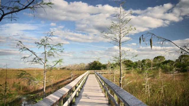video of everglades national park landscape in florida  usa - miami dade county stock videos & royalty-free footage