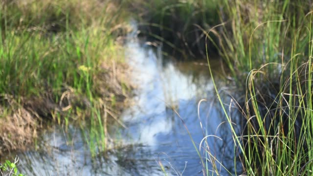 video of everglades national park river of grass landscape in florida  usa - miami dade county stock videos & royalty-free footage