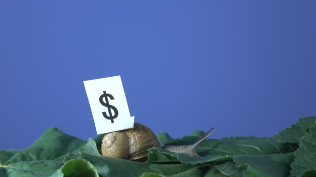 UHD Video Of Garden Snail With Dollar Sign